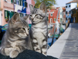 Venetian Cats Alongside Fond Die Terranova Canal Photographic Print by Holger Leue