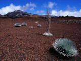 Silversword Plants Growing in Volcanic Crater Fotografisk tryk af John Elk III