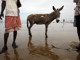 Two Workers Taking Break from Collecting Salt with a Donkey Between Them, Lake Asele Photographic Print by Johnny Haglund
