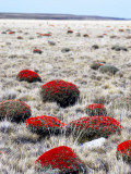 Steppe Country on the Road from El Calafate to Esperanza Fotografie-Druck von Damien Simonis