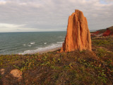 Termite Mound on Coast of Cape York, North of Cooktown Photographic Print by Michael Gebicki