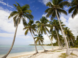 Palm Trees on Beach Photographic Print by Greg Johnston