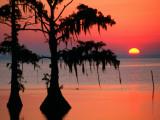 Sunrise at Lake Palourde with Spanish Moss Trees in Silhouette Fotografisk tryk af John Elk III