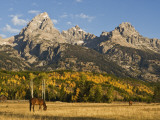 Horses and the Teton Range Photographic Print by Douglas Steakley