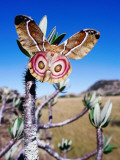 Endemic Suraka Silk Moth (Antherina Suraka), Female, Resting on a Pachypodium Plant Photographic Print by Karl Lehmann
