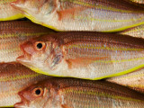 Fish for Sale at Tsukiji Fish Market Photographic Print by Krzysztof Dydynski