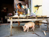 Woman and Pet Pig Photographie par Christopher Groenhout