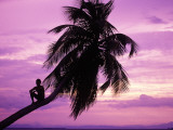 Young Boy in Palm Tree at Sunset Fotografie-Druck von Greg Johnston