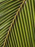 Palm Frond, Westpunt Photographie par Holger Leue
