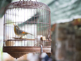 Bird in Cage at Mong Kok Bird Market Photographic Print by Greg Elms