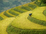 Black H'Mong Woman in Rice Field Terraces Near Tafen Village Photographic Print by Diana Mayfield