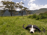 Cape Buffalo Skull and Hills of Ngorongoro Crater Photographic Print by Douglas Steakley
