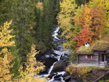 Forest of Birches and Aspens in Autumn by Brook with Traditional Wooden Forest Hut Photographic Print by Christer Fredriksson