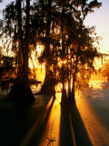 Bald Cypress Trees Silhouetted at Sunset at Lake Martin Photographic Print by John Elk III