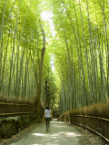 Bamboo Forest, Arashiyama Photographic Print by Greg Elms