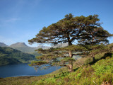 Scots Pines on Shore of Loch Hourn, Knoydart Peninsula Photographic Print by Feargus Cooney