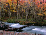 Nothofagus Forest and Stream on Hielo Azul Circuit Walk, Comarca Andina, Lake District Photographic Print by Grant Dixon