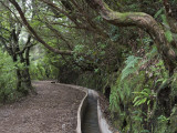 Levada Do Furado Photographic Print by Holger Leue