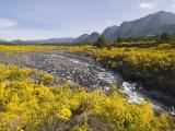 Landscape with Scotch Broom Growing in Abundance Fotografisk tryk af John Elk III