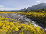 Landscape with Scotch Broom Growing in Abundance Photographic Print by John Elk III