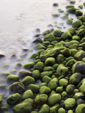 Algae-Covered Boulders on Beach Photographic Print by Holger Leue