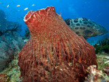 Potato Cod Photographic Print by Johnny Haglund