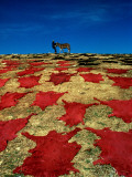 Drying of Coloured Hides in Fes after the Tanning Proces Photographic Print by Izzet Keribar