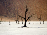 Bare Trees in Salt Plain with Sheer Hills Behind Photographic Print by Neil Setchfield