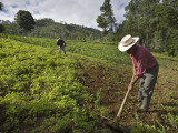 Farmers Clearing Shrub from Corn Fields Near Sabalpop Village Photographic Print by Diego Lezama