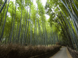 Path Leading Through Bamboo Forest Near Nonomiya-Jinja Shrine Fotografie-Druck von Christopher Groenhout