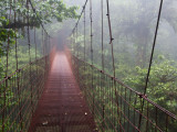 Cost Rica Monteverde Eco Tourism Canopy Walkway in Cloudfores Photographic Print by Christer Fredriksson