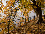 Tree-Lined Promenade Along Shore of the Bodensee (Lake Constance) Fotografie-Druck von Glenn Van Der Knijff