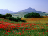 Rolling Hills with Poppies Near Olvera Stampa fotografica di Tomlinson, David
