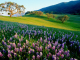 Carmel Valley in Spring Fotografie-Druck von Douglas Steakley