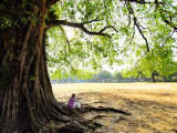 Man Sitting under a Banyan Tree Photographie par Felix Hug