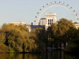 London Eye from Green Park Photographic Print by Doug McKinlay
