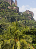 Coconut Trees and Mountain from Mahe International Airport Photographic Print by Holger Leue
