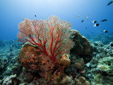 Underwater Reef Photographic Print by Johnny Haglund