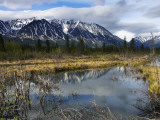 Beaver Pond Beneath Peaks of the St Elias Range Photographic Print by Michael Gebicki