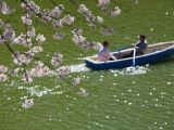 Rowing Along Cherry Blossom-Lined Chidorigafuchi Photographic Print by John Banagan