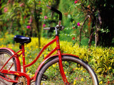 Red Bicycle, Half Moon Resort Photographic Print by Greg Johnston
