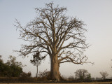Baobab Tree Photographic Print by Christopher Herwig