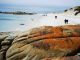 Bushwalkers on Beach at Stumpy Bay, Bay of Fires Walk Photographic Print by Holger Leue