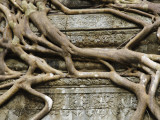 Detail of Tree Roots Overgrowing Ruins of Angkor Temple at Beng Mealeay Reproduction photographique par Grant Dixon