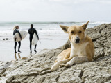 Dog Resting and Surfers Walking Along Beach at Anchor Point Photographic Print by Christian Aslund