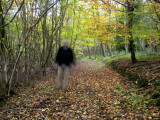 Autumn Stroll in a Home Counties Wood, North Downs Photographic Print by Doug McKinlay