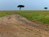 Dirt Road and Acacia Trees in Reserve Photographic Print by Doug McKinlay