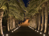 Palm-Lined Path and Pier at Night Photographie par Holger Leue