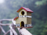 Bird House on Levada Do Furado Levada Walk Photographic Print by Holger Leue