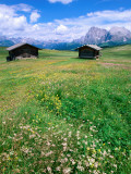 Alpine Meadow with Sasso Lungo, Alpe Di Susi, Dolomites Photographic Print by John Elk III